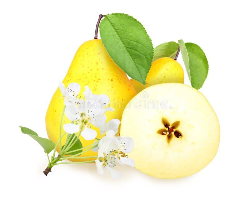 Peras amarelo-alaranjadas frescas com folha verde imagens de stock