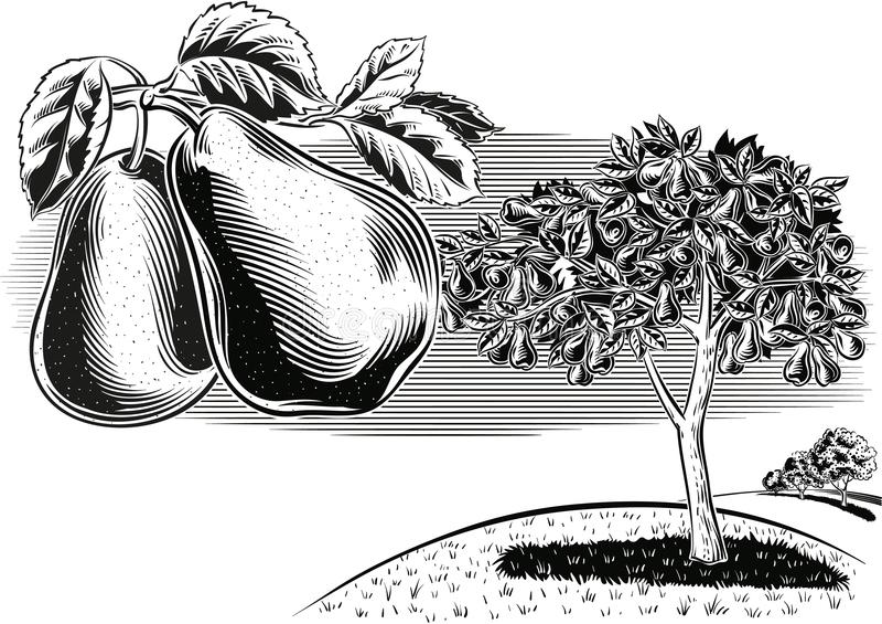 Peras de la rama en un paisaje de la huerta stock de ilustración