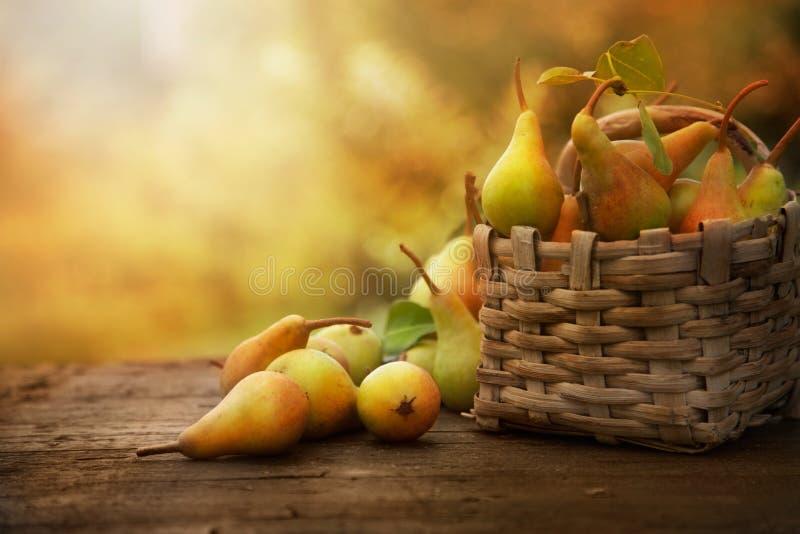Peras del otoño imágenes de archivo libres de regalías