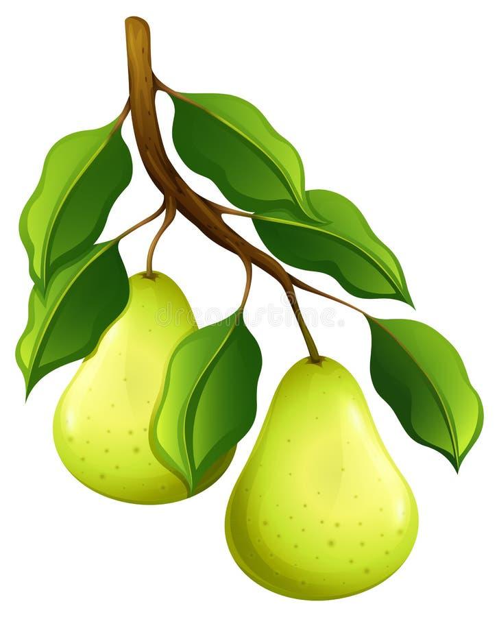 Peras frescas en rama libre illustration