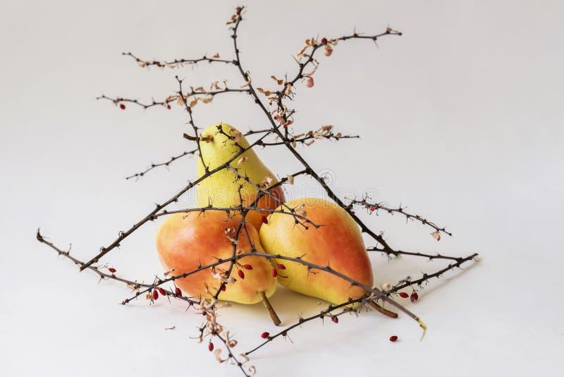 Peras maduras brilhantes nos ramos espinhosos secos com bagas, ainda vida como o ikebana em um fundo claro imagens de stock royalty free