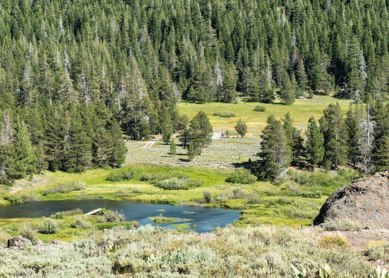Perazzo-Wiesen, Nordsierra Nevada Range stockfotografie