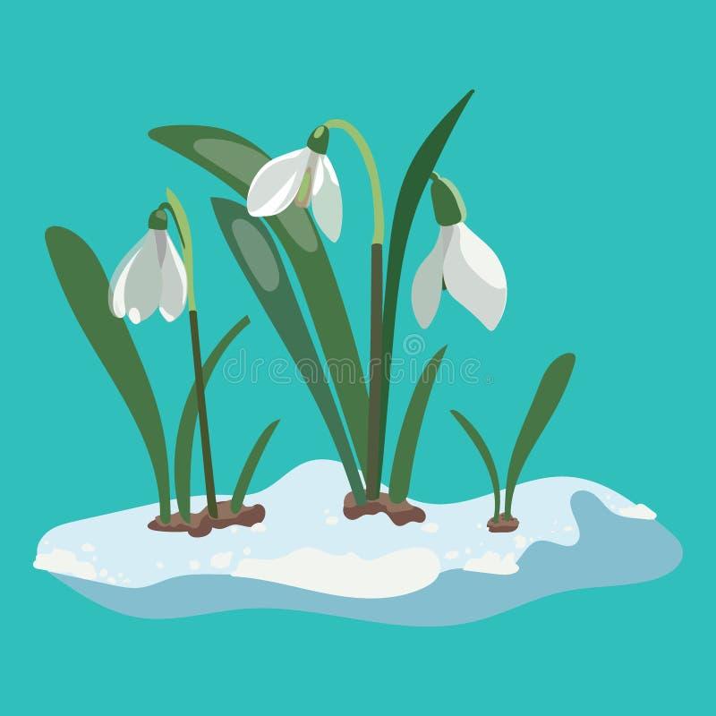 Perce-neige de bande dessinée Illustration d'une fleur de ressort Retrait illustration libre de droits