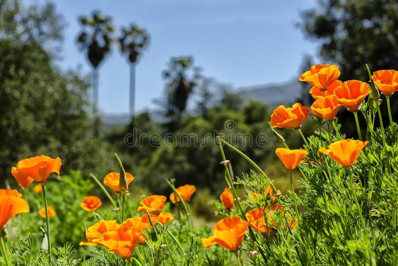 150 percenten Californië stock foto