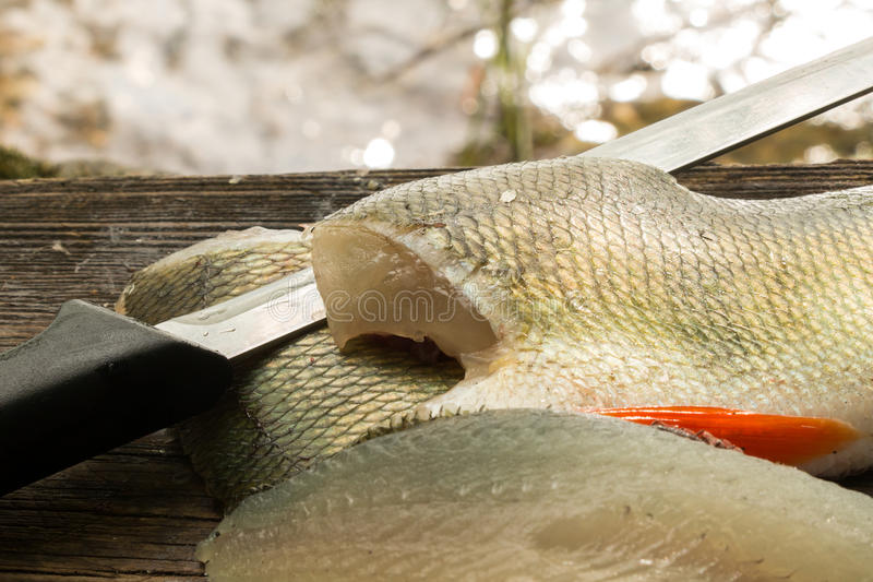 Perch fillets and a fish filleting knife with. Perch fillets with skin and a fish filleting knife with water background stock photography