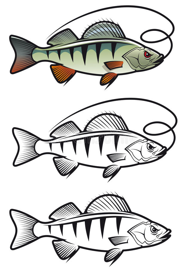 Download Perch Fish Stock Image - Image: 23451371