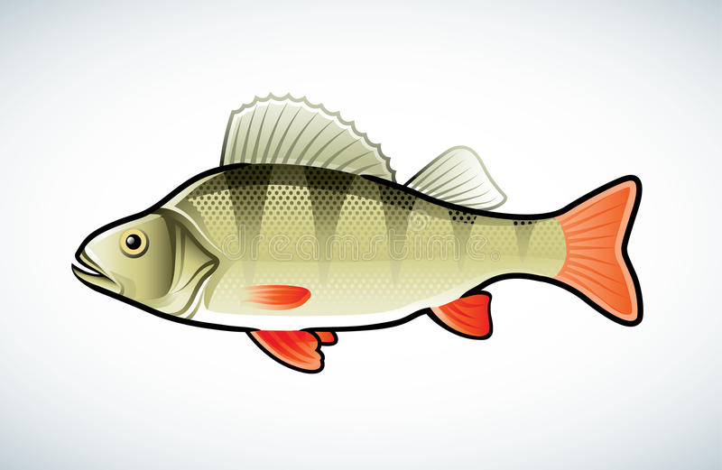 Download Perch illustration stock vector. Image of clipart, wild - 18594196