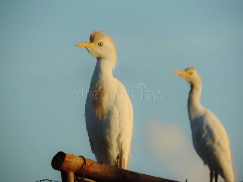 On the Perch royalty free stock images