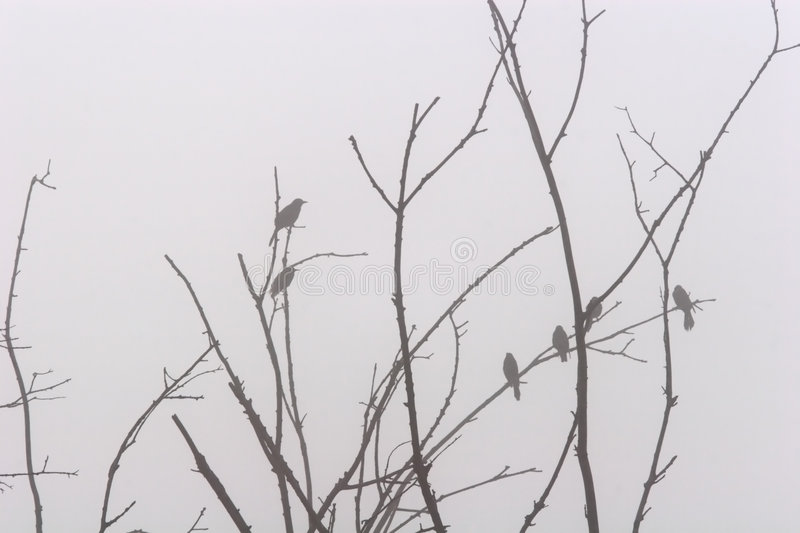 Perched in the Fog. Silhouette of several birds perched in a tree on a foggy morning stock photo
