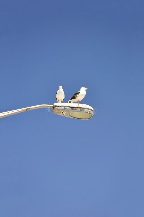 Perched Seagulls stock photos