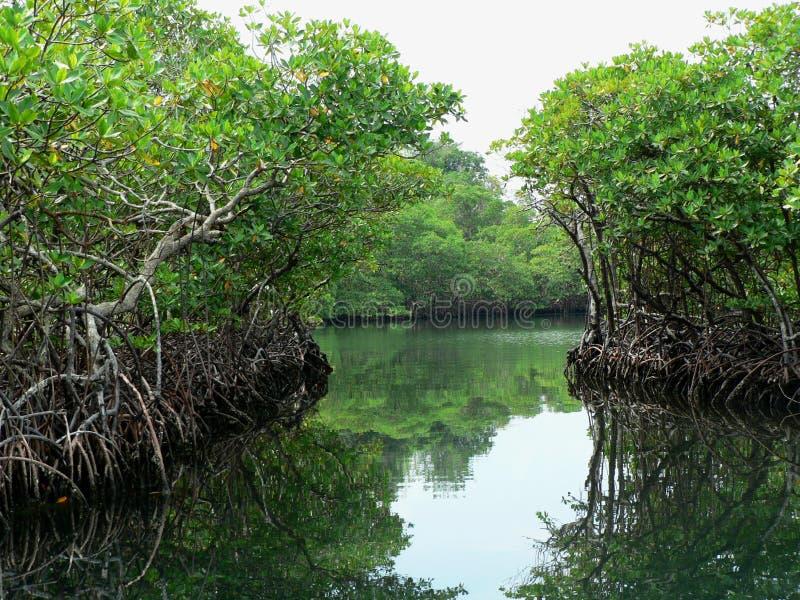 Percorsi dell'acqua attraverso la giungla, Panama fotografia stock libera da diritti