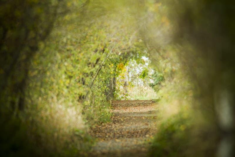 Percorsi delle nature fotografia stock