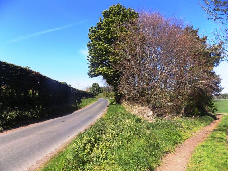 Percorsi Nr del campo & degli alberi Crookham, Northumberland del nord, Inghilterra fotografia stock