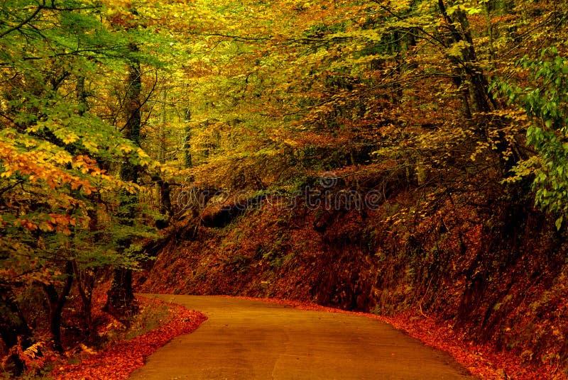 percorso fotografie stock
