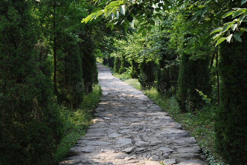 percorso Albero-protetto fotografia stock