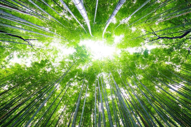Percorso alla foresta di bambù, Arashiyama, Kyoto, Giappone immagini stock libere da diritti