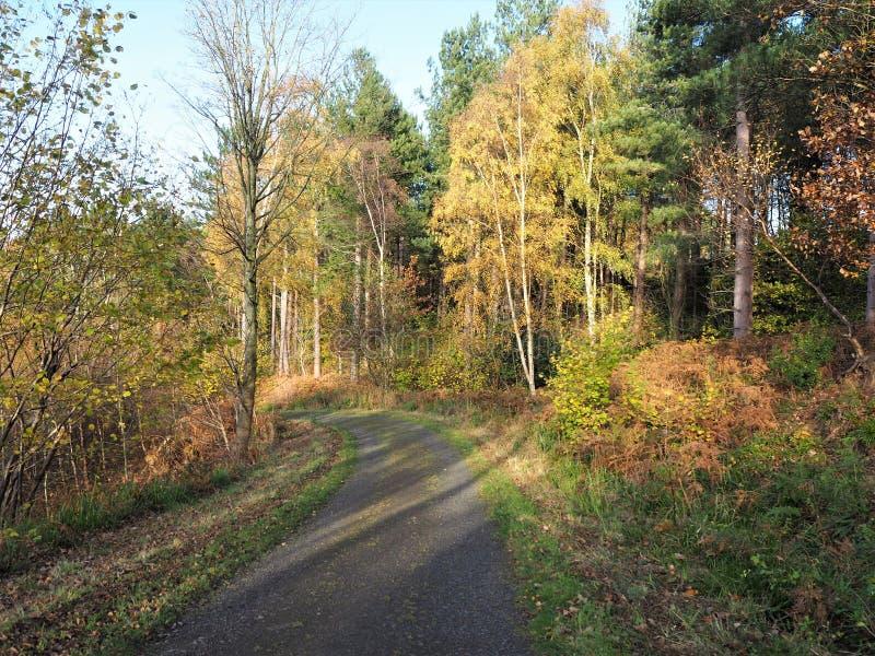 Percorso attraverso gli alberi nel fogliame di autunno a Gibside fotografie stock libere da diritti