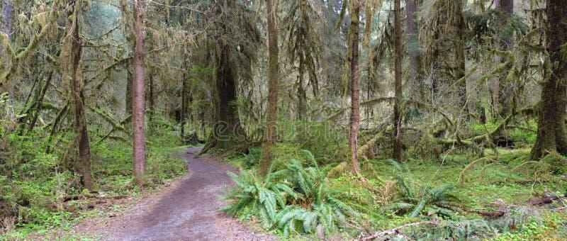 Percorso attraverso la foresta pluviale temperata fotografie stock
