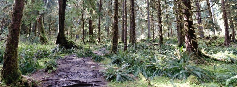 Percorso attraverso la foresta pluviale temperata immagini stock