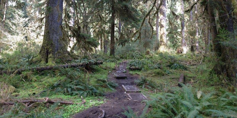 Percorso attraverso la foresta pluviale temperata fotografia stock libera da diritti