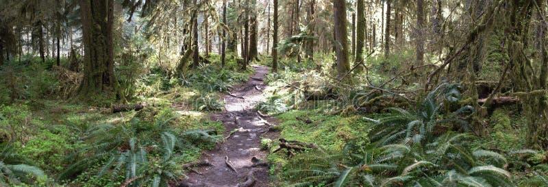 Percorso attraverso la foresta pluviale temperata immagine stock libera da diritti
