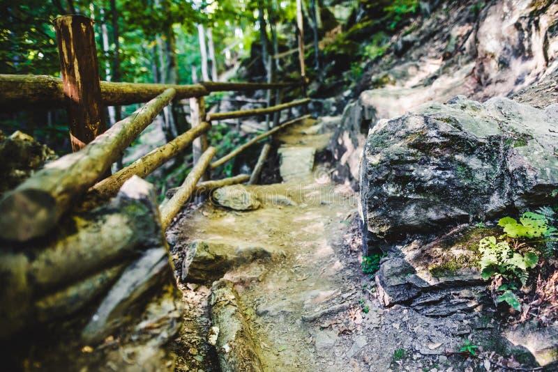 Percorso attraverso la foresta verde fotografie stock