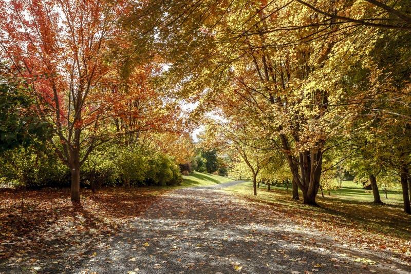 Percorso in autunno a Mosca, Idaho fotografia stock