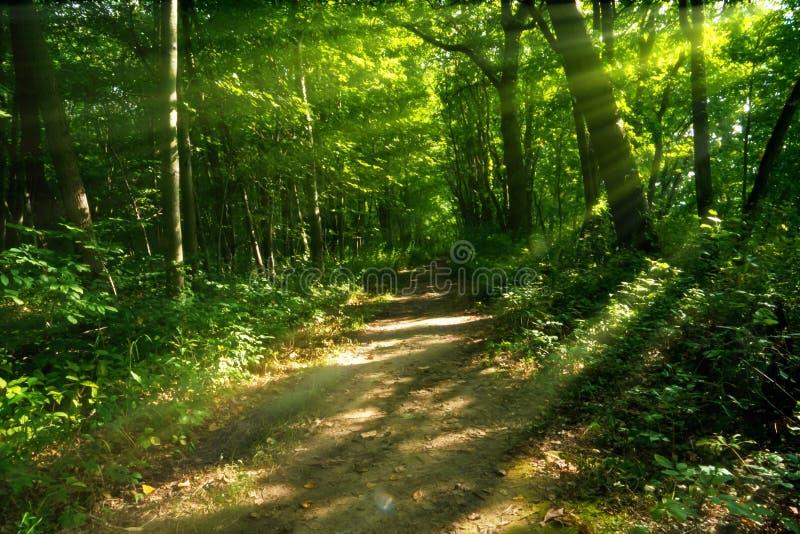 Percorso boscoso misterioso immagine stock