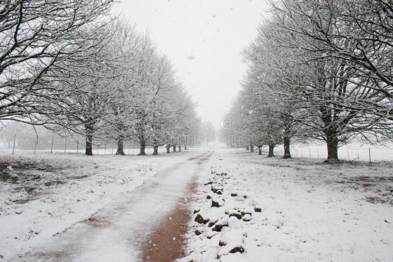 Download Percorso Coperto Da Neve Che Piombo All'orizzonte Fotografia Stock - Immagine di orizzonte, allineato: 221294