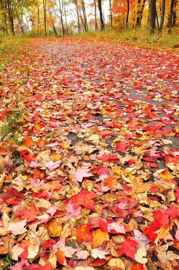Percorso coperto di foglie di acero immagine stock libera da diritti