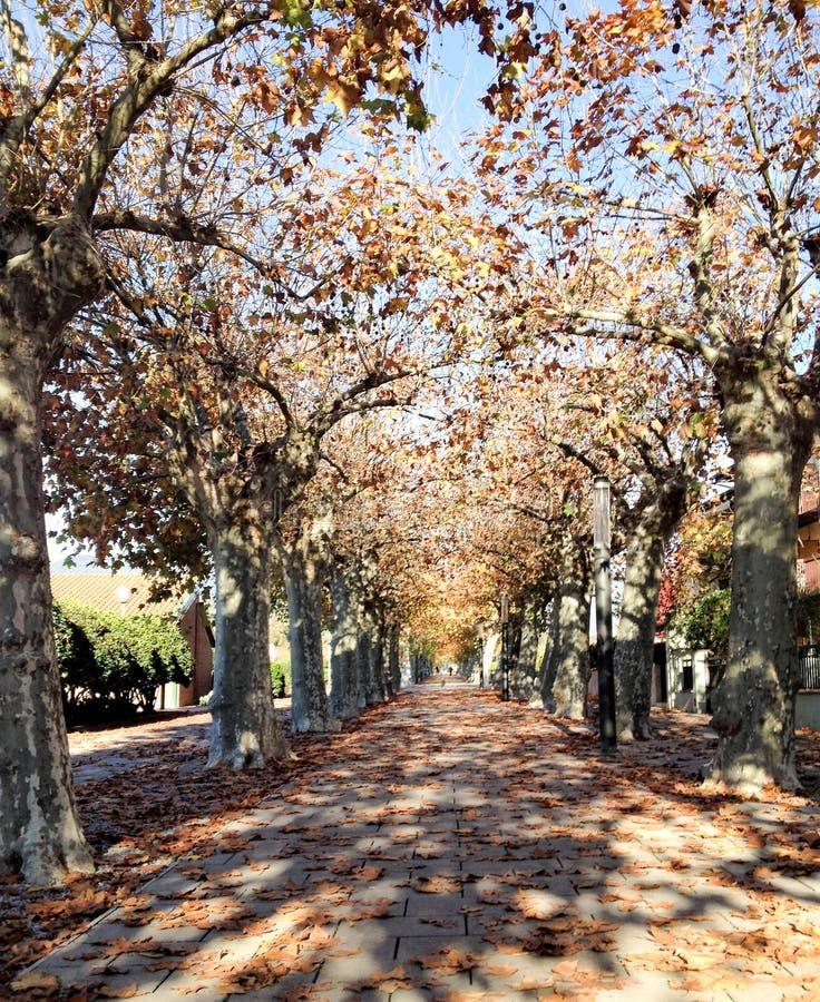 Percorso degli alberi di autunno immagine stock libera da diritti