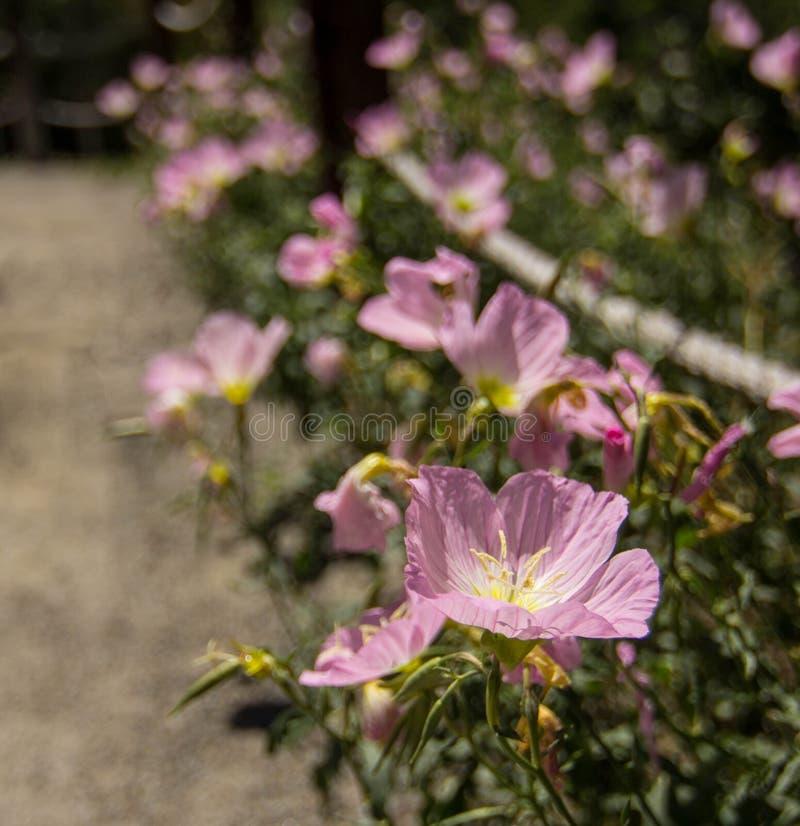 Percorso dei fiori fotografie stock libere da diritti