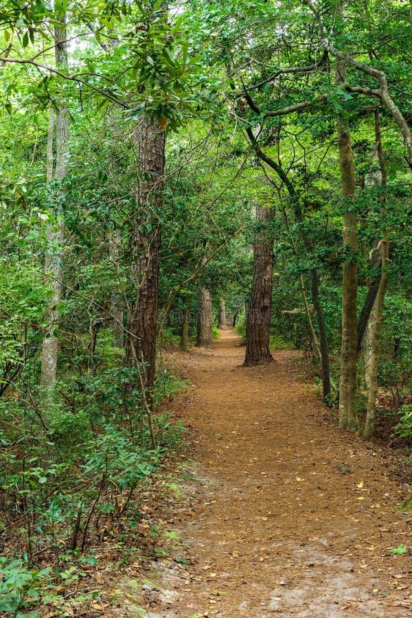 Percorso del terreno boscoso immagine stock