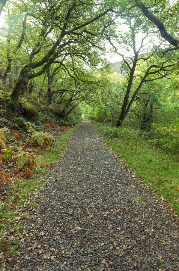 Percorso del terreno boscoso, Britannici Autumn Fall fotografie stock libere da diritti