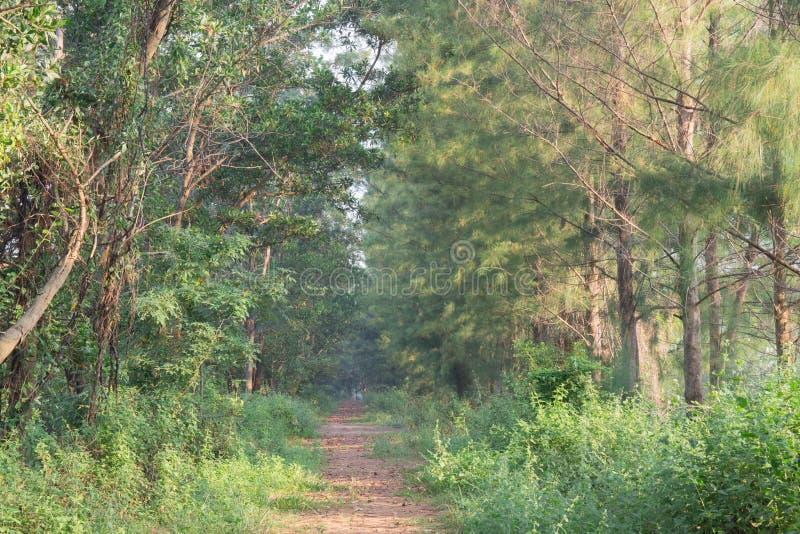Percorso del vicolo del passaggio pedonale con gli alberi verdi in Forest Beautiful Alley In fotografia stock