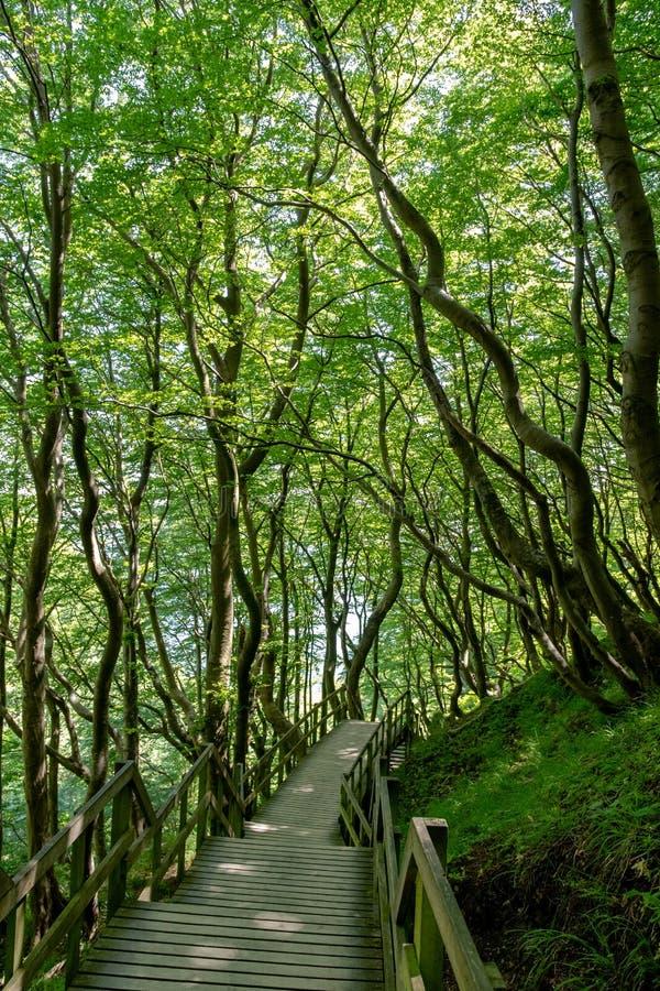 Percorso dell'albero a lunedì fotografia stock libera da diritti