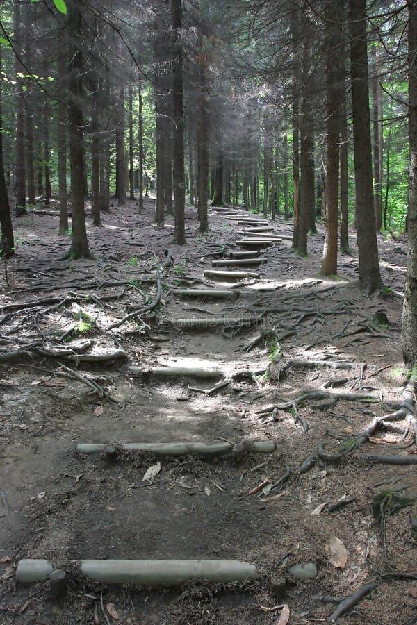 Percorso della foresta di Transferrina, Slovenia immagini stock libere da diritti