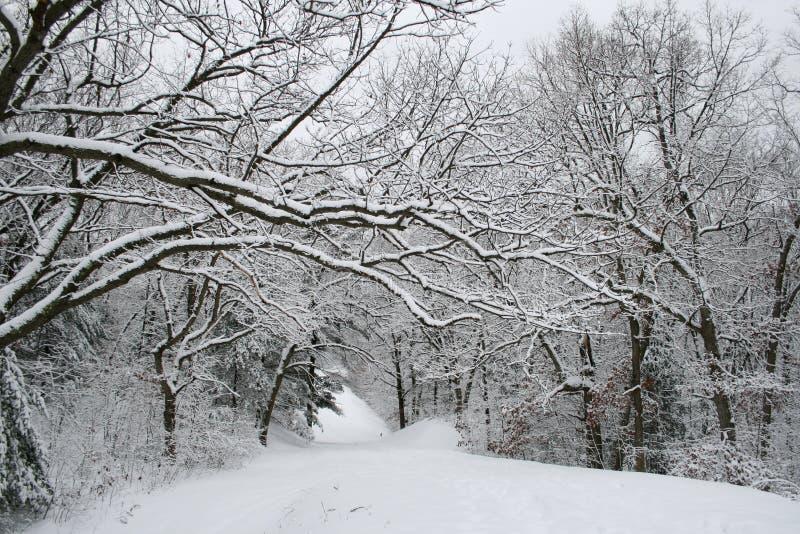 Percorso dello Snowy immagine stock