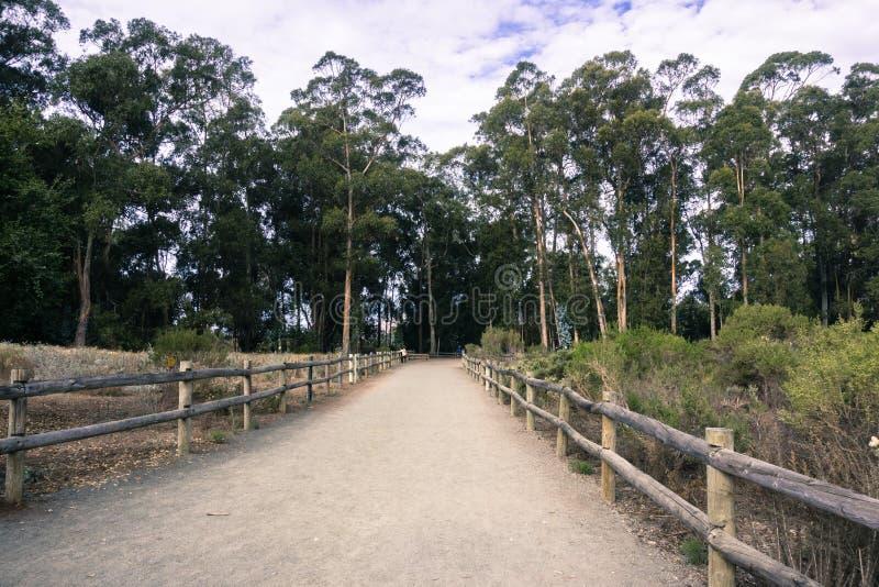 Percorso di camminata attraverso un boschetto dell'albero di eucalyptus in spiaggia di Pismo, California in cui le farfalle di mo immagini stock libere da diritti