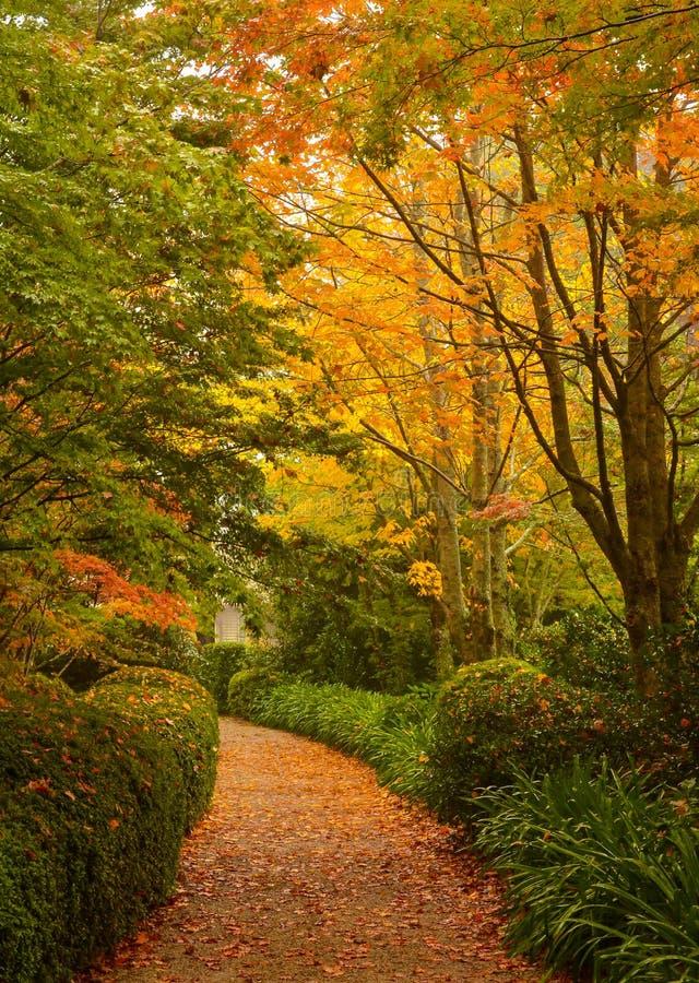 Percorso di camminata di Autumn Trees Beside A immagine stock libera da diritti