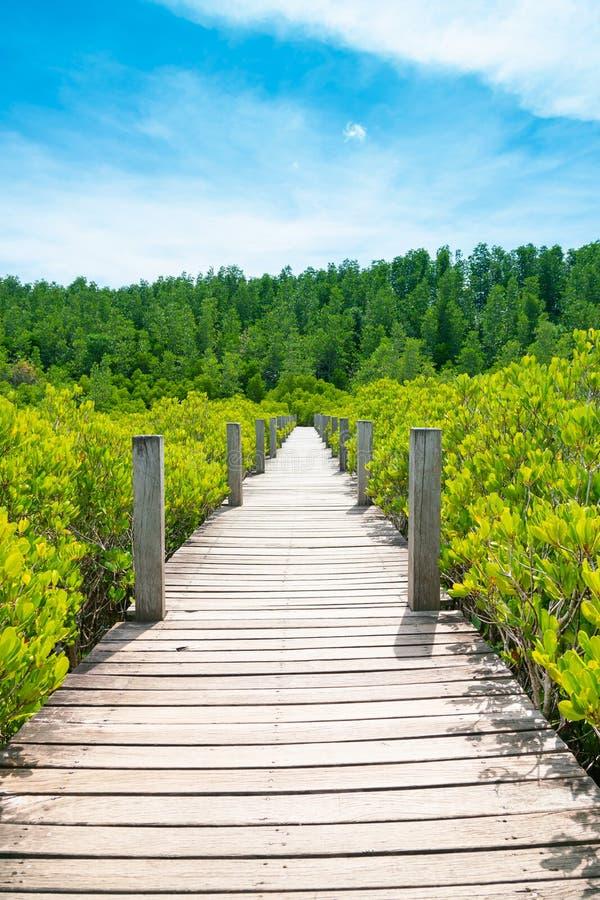 Percorso di camminata di legno sopra la foresta tropicale della linea costiera immagine stock libera da diritti
