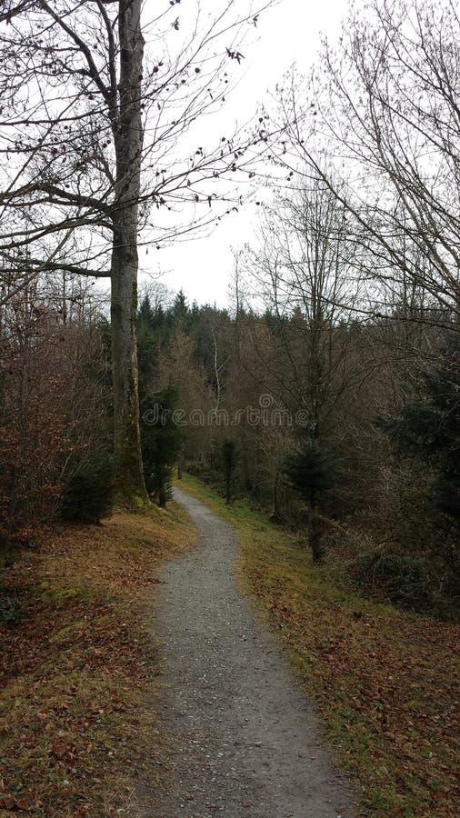 Percorso di camminata piacevole in Svizzera immagine stock