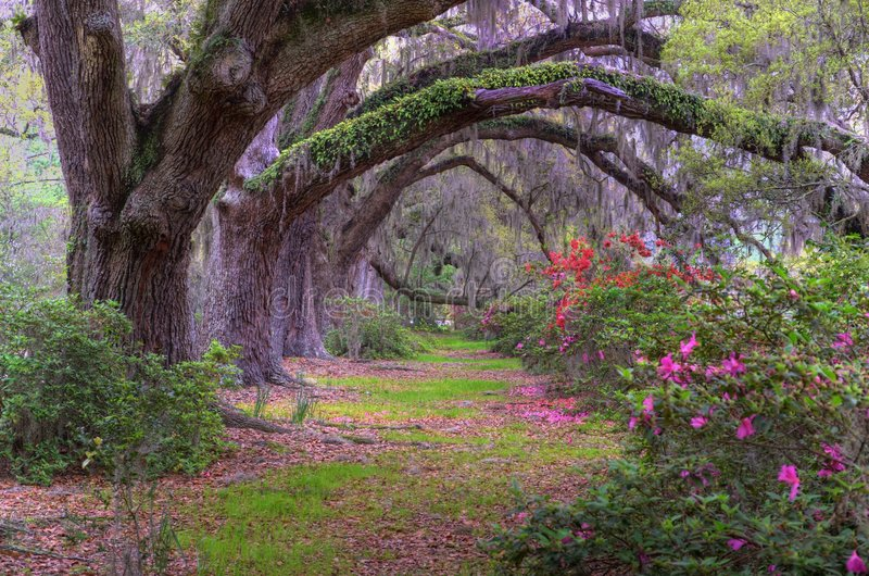 Percorso di foresta fotografie stock libere da diritti
