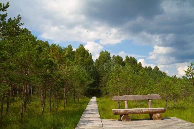 Percorso di foresta, un banco fotografie stock