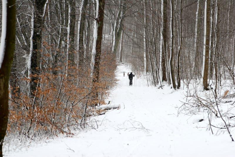 Percorso di inverno immagini stock