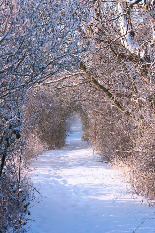 Percorso di inverno fotografia stock