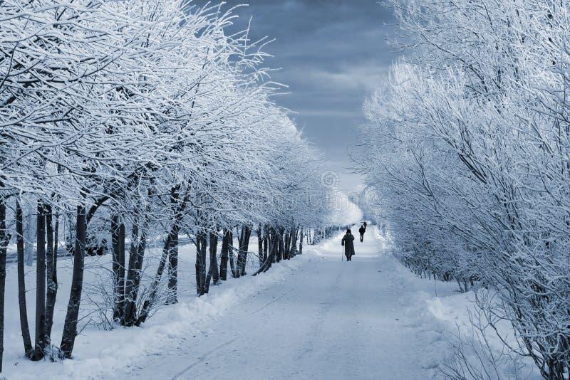 Percorso di inverno fotografie stock libere da diritti