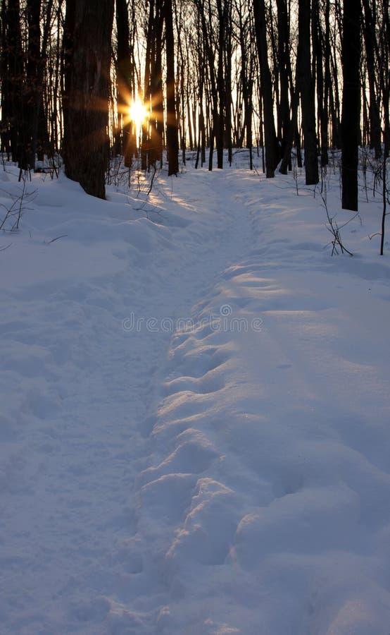 Percorso di inverno al crepuscolo fotografia stock libera da diritti