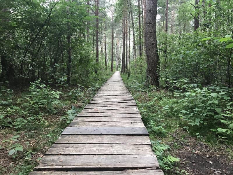 Percorso di legno in legno immagini stock libere da diritti
