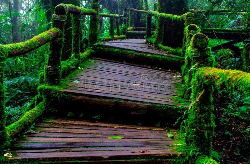 Percorso di legno con muschio in foresta immagini stock libere da diritti